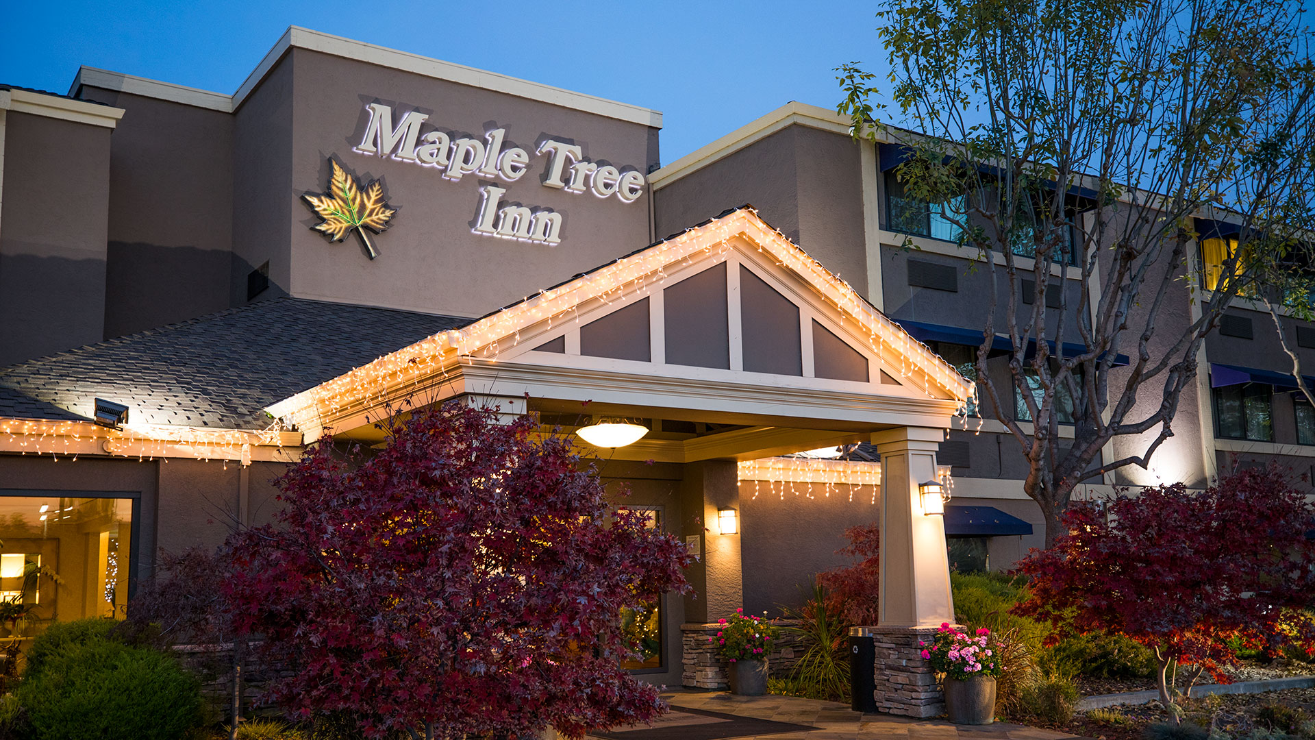 Maple Tree Inn Front Entrance At Night